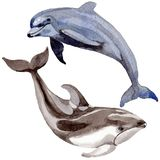 Dolphin wild mammals in a watercolor style isolated. Royalty Free Stock Photography