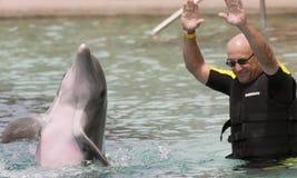 Dolphinaris的,亚利桑那一个访客,与海豚互动 库存照片