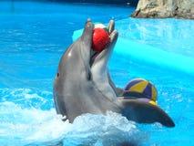 Dolphinarium à Odessa, Ukraine Photographie stock libre de droits