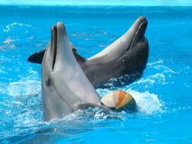 Dolphinarium στην Οδησσός, Ουκρανία Στοκ Εικόνες