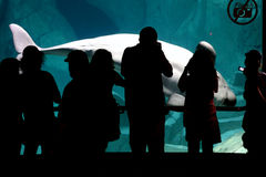 dolphinarium στοκ εικόνες