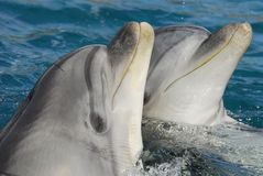 Dolphinarium Royalty Free Stock Images