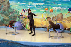 Dolphinarium Zdjęcia Royalty Free
