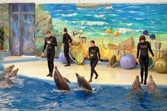 Dolphinarium Royalty-vrije Stock Afbeelding