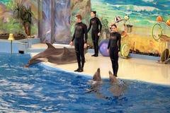 Dolphinarium Stock Foto's