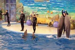 Dolphinarium Zdjęcia Stock