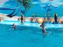 Dolphinarium fotografia stock