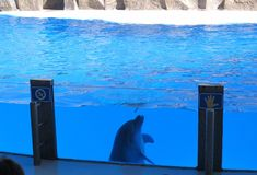 Dolphinarium a Batumi è uno dello spettacolo più interessante per gli adulti ed i bambini fotografia stock libera da diritti