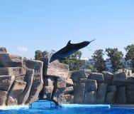 Dolphinarium in Batumi Stock Foto's