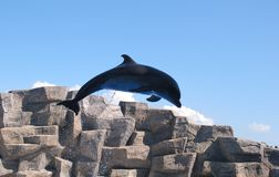 Dolphinarium a Batumi Immagine Stock
