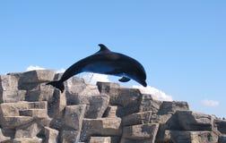 Dolphinarium in Batumi Stock Image