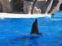 Dolphinarium in Batumi Royalty Free Stock Photo