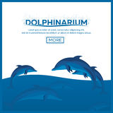 Dolphinarium. Dolphin show. Banner. Ticket. Vector flat illustration. Royalty Free Stock Photo