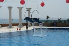 Dolphinarium em Turquia Golfinhos do voo fotografia de stock royalty free