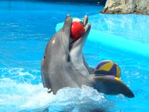 Dolphinarium en Odessa, Ucrania fotografía de archivo libre de regalías