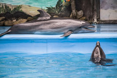 Dolphinarium in Kiev Royalty Free Stock Photo