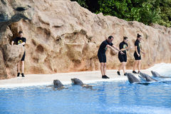 Dolphinarium in Loro Park Stock Photos