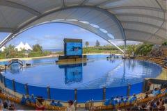 Dolphinarium in Loro Park Tenerife.Canary Islands Stock Photo