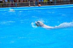 Dolphinarium Nemo - dieses ist ein Ort des Positivs! Wenn das Leben nach Odessa geholt hat, dann, mindestens sobald das dolphinar lizenzfreie stockfotos
