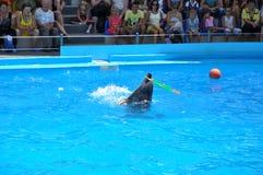 Dolphinarium Nemo - mostra excelente da noite Eu gostei odessa ucrânia foto de stock