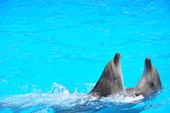 Dolphinarium Nemo - this is a place of positive! If life has brought to Odessa, then at least once the dolphinarium is simply need. Clean water of the Black Sea Stock Images
