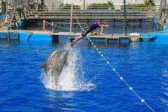 Dolphinarium Oceanografic Валенсия Испания 17/07/2012 Стоковое Фото