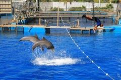 Dolphinarium Oceanografic Валенсия Испания 17/07/2012 Стоковое Изображение RF