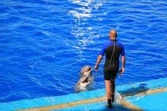Dolphinarium Oceanografic Валенсия Испания 17/07/2012 Стоковые Изображения