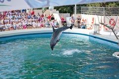 dolphinarium przedstawienie Obrazy Royalty Free