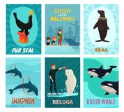 Dolphinarium Show Cards Set. With seal and beluga symbols flat isolated vector illustration Royalty Free Stock Images