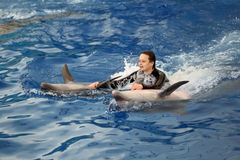 The Dolphinarium Stock Photography