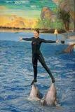 The Dolphinarium Stock Image