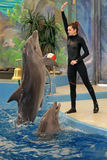 The Dolphinarium. SOCHI, RUSSIA - MAR 27, 2014: The Dolphinarium in the Riviera Park. The instructor performs with marine mammals - dolphins stock photography