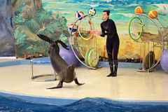 The Dolphinarium Stock Images