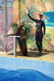 The Dolphinarium Royalty Free Stock Photos