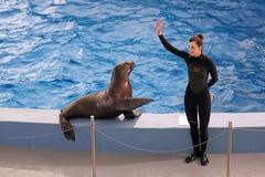 The Dolphinarium Stock Photos