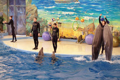 The Dolphinarium Stock Photos