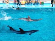 Dolphinarium royalty free stock image