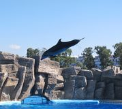 Dolphinarium is a wonderful place worth visiting. Dolphinarium - a wonderful place that is really worth a visit - one of the most popular places in any city royalty free stock photos