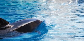 Dolphine Royalty Free Stock Images