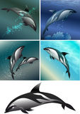 Dolphine set. Set of dolphins including five images -  isolated dolphin in black and white and dolphins against different colour sea background Royalty Free Stock Images