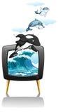 Dolphines游泳和跳跃在电视 库存图片