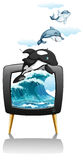 Dolphines swimming and jumping on TV Stock Images
