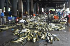 Dolphinfish de Mahi-mahi en el puerto pesquero de Hsin-kang, el municipio de Chenggong, Taiwán Foto de archivo libre de regalías
