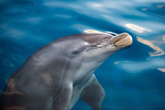 Dolphing smiling eye close up portrait Stock Photos