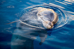 Dolphing smiling eye close up portrait Stock Photo