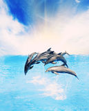 Dolphins. Jumping in the sea Royalty Free Stock Photo