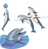 Dolphins Royalty Free Stock Images