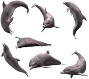 Dolphins. Many Dolphins in pose Royalty Free Stock Photography