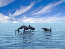 Dolphins. Royalty Free Stock Image
